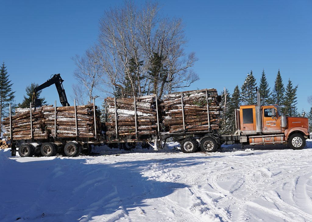 nova scotia forestry