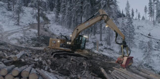 caterpillar forestry